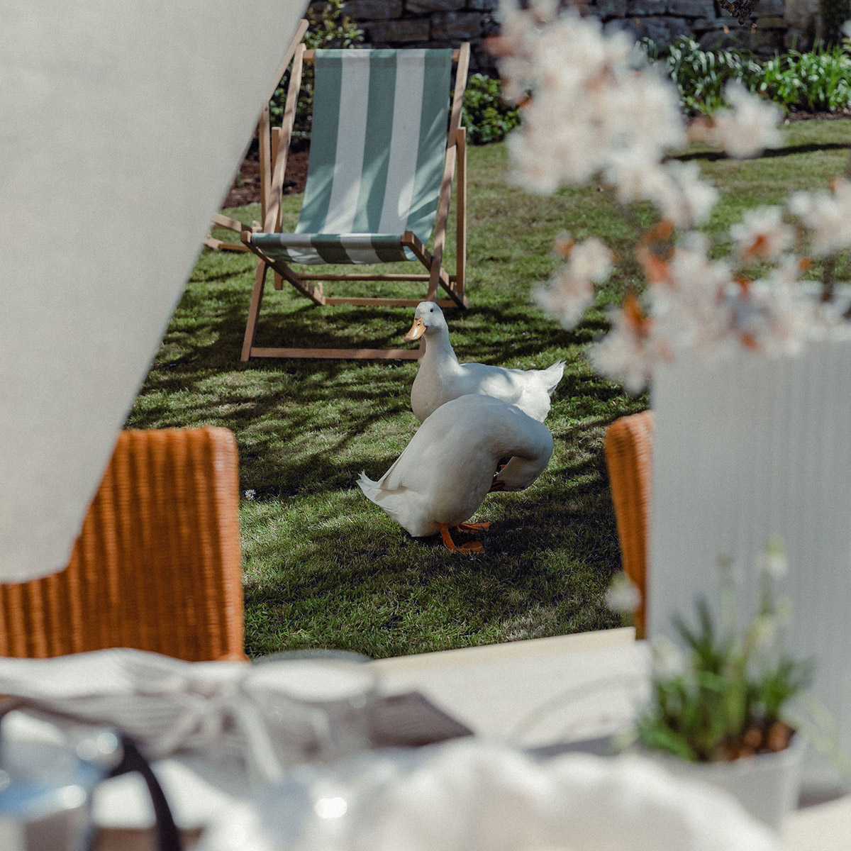 Studio Blackwell Fabric of Summer Deck Chair Zestar Clover Ducks